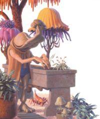 Momaw Nadon pflegt seinen Bafforr-Baum